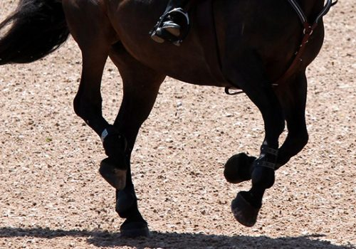 What To Do When Your Horse Bucks, Plays, Or Pulls After The Jump