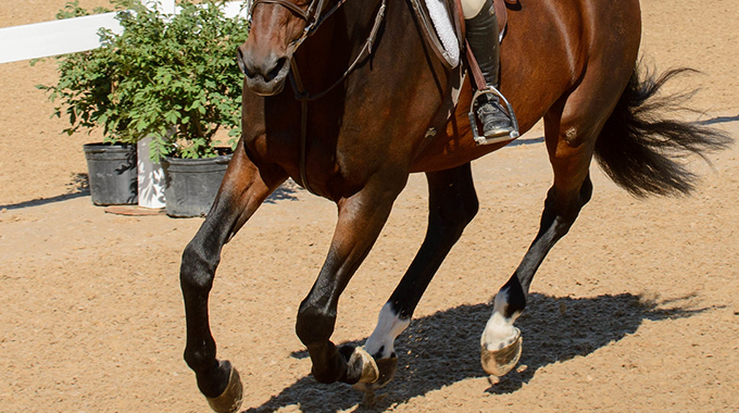 Exercises To Teach Your Horse To Stay Light Between Your Aids